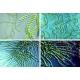 Cyanobakterier blågröna alger inspirerad halsband